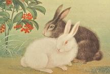Rabbits & Hares / by Heidi Andrade