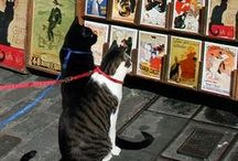 Art of Cat ^..^ / For Serious Cat Freaks Like Me-ow! / by Teresa