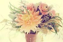 Wedding / by Ana Soares