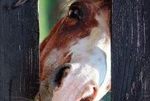 Equine Therapy / Everthing Horsey / by KaSandra Verett