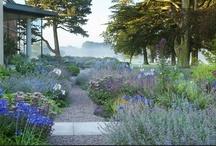 Terrace Garden  / by Debra Sandy