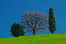 Green and Blue / Sometimes a little red or yellow. Anything nature. / by Enid Gumby
