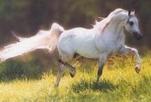 horses / by Muriel Pelle-calis