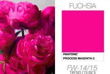 Embrace the Fuchsia / by Gina Subki