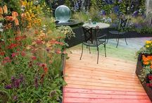 How does your garden grow / Plants & gardening ideas / by Tracey Luttgens