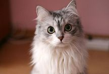 CATS!!!!! / My one true love / by Kensi Bassett