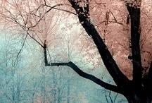 Wonderful Earth... / by Banu Abdusselamoglu