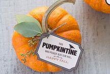 Pumpkins / by Peltzer Farms