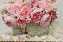 bloemen/vazen / by Manuela Jakobs