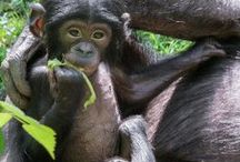 Awww Animals! / Cute stuff! / by 94.9 Cincinnati