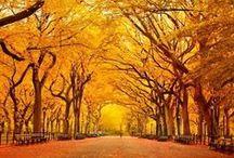 Fall!  / by 94.9 Cincinnati