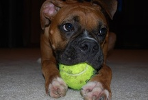 Boxers!! / by Chels