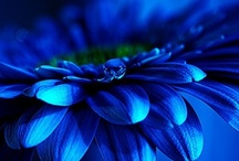 Tru乇 Bレu乇 / ~❤~From the blue skies to the deep blue sea and shades of blue inbetween~❤~   / by Karen Stevens