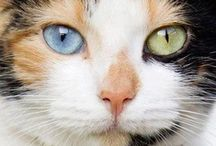 Pictures of cats / by Marian McTier