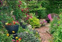 Garden / by Sara Murphy
