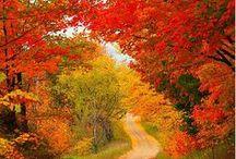 Autumn / by Leila Monaghan
