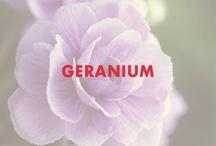 Geranium / by Beautycounter