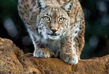 Gros chat / by Florence Crepin