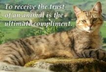 Inspirational Quotes & Words To Live By / Just a small reminder of why we do what we do. / by Animal Allies Rescue Foundation (AARF)