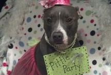 Doggy Parties, Yappy Hour Examples & Essentials / by Animal Allies Rescue Foundation (AARF)