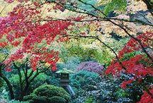 Gardens / by Plasma Girl