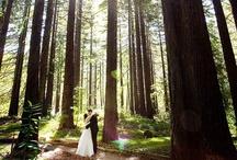 Weddings / by Benbow Inn