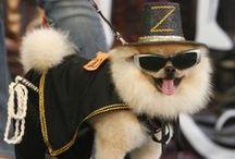 OhLaLa Pets Fashion / by OPAWZ