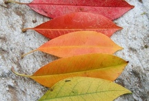 Fall / I luv fall! / by Carol King