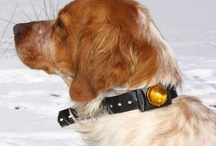 Pet Safety / keeping your dog seen in the dark / by Night-Gear