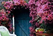 Outdoor charmers / Love the outdoors and all sorts of gardens / by Peggy Thompson