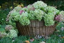 Flower Arrangements / by Pamela