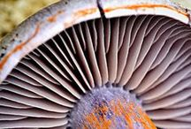 Nature Inspires - Fungi & Seeds / by V Cast