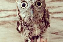 Owls / by Lauren Mmmmmmm