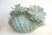 Succulents / by Corrie Wittebrood
