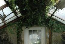 garden / by sylwia li