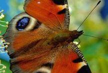 Aves y mariposas / by Hegar Jimenez