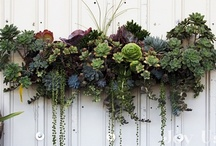 Gardening and Garden Inspirations  / by Adsson