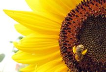 Bees / by Trudy Saunders