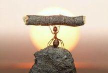 Inspiration / by Divine Consciousness