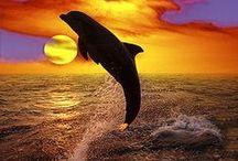 Dolphins (Delfines) / by Sergio Mancisidor