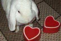 Kaniner / Bunny - Rabbit / Kaniner :) Bunnies  / by Inger Johanne