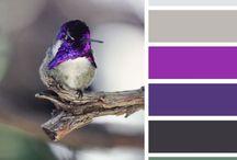 Color palettes / by Carla Van Galen