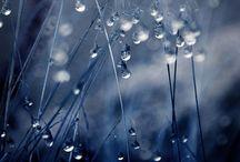 """Natures Blue"" / by Carla Van Galen"