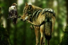 Wolves & Dogs / by Melissa Buenneke