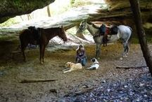 Camping with Horses / by Horse Trails & Camping Across America