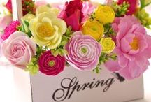Spring / by Ana ♥