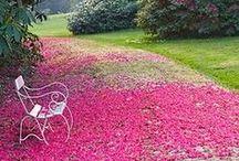 avant Garden / by Alline da Costa