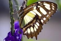 Butterflys / by Robert Escoto