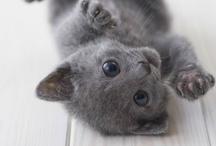Cute Animals / by Danielle Roberts