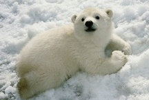Polar Bear Cubs / by Sachiko